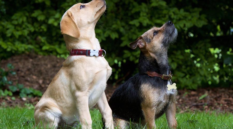 济南市开发养犬管理app,加大城市养犬监管力度