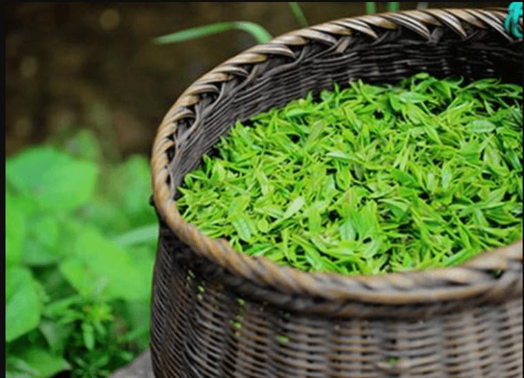 茶叶商城APP开发公司米么信息怎么样?